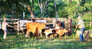 Trece animales le fueron devueltos al dueño, luego de cumplir con el debido proceso para la verificación y estado de los mismos.