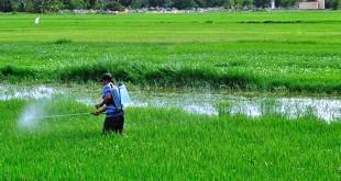 """""""Lo que desembocaría en un desabastecimiento de agua en la región, por lo que es hora de que se amplíe el panorama con otros cultivos""""."""
