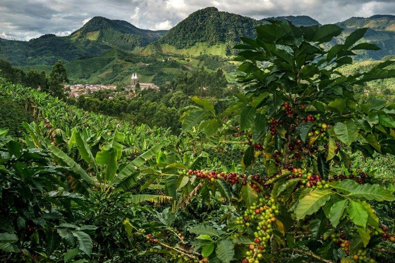 Viajes traves a por las monta as de colombia en busca de for Arriendos en ciudad jardin sur bogota